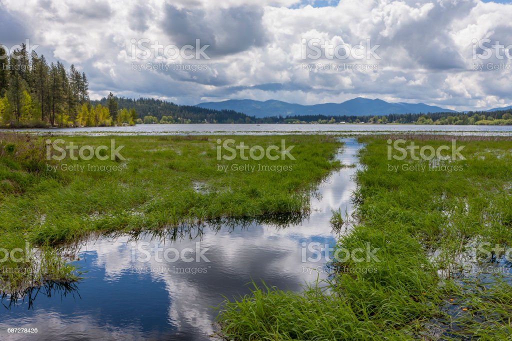 Wetlands by a lake. stock photo