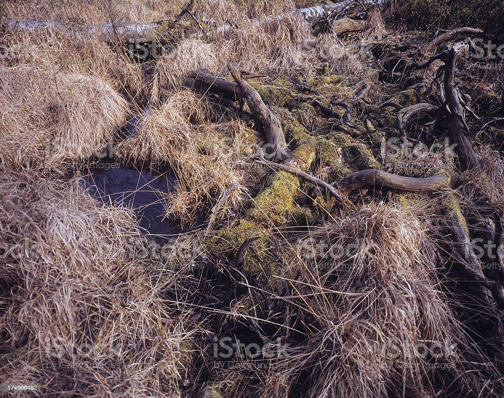 Wetlands composition stock photo