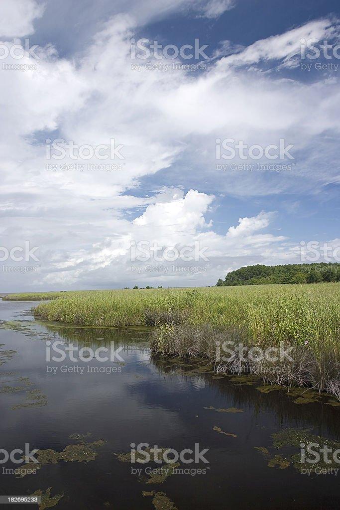Wetlands / Estuary royalty-free stock photo