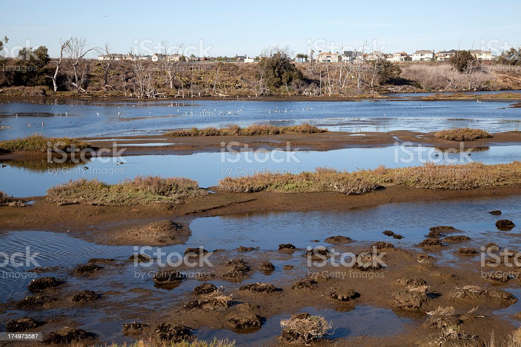 Wetlands in autumn royalty-free stock photo