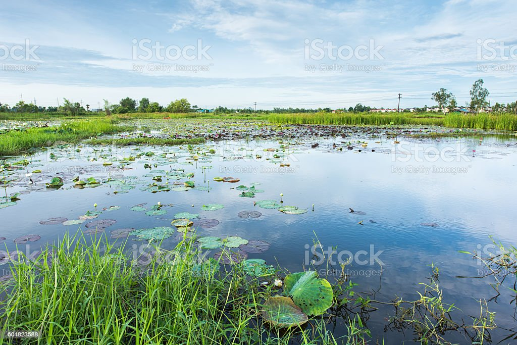 Wetlands in Nature Reserve stock photo
