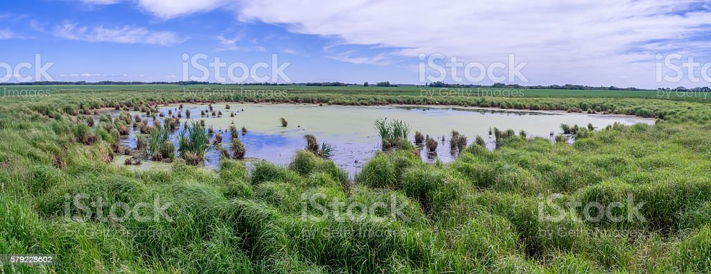 wetlands in Saskatchewan stock photo