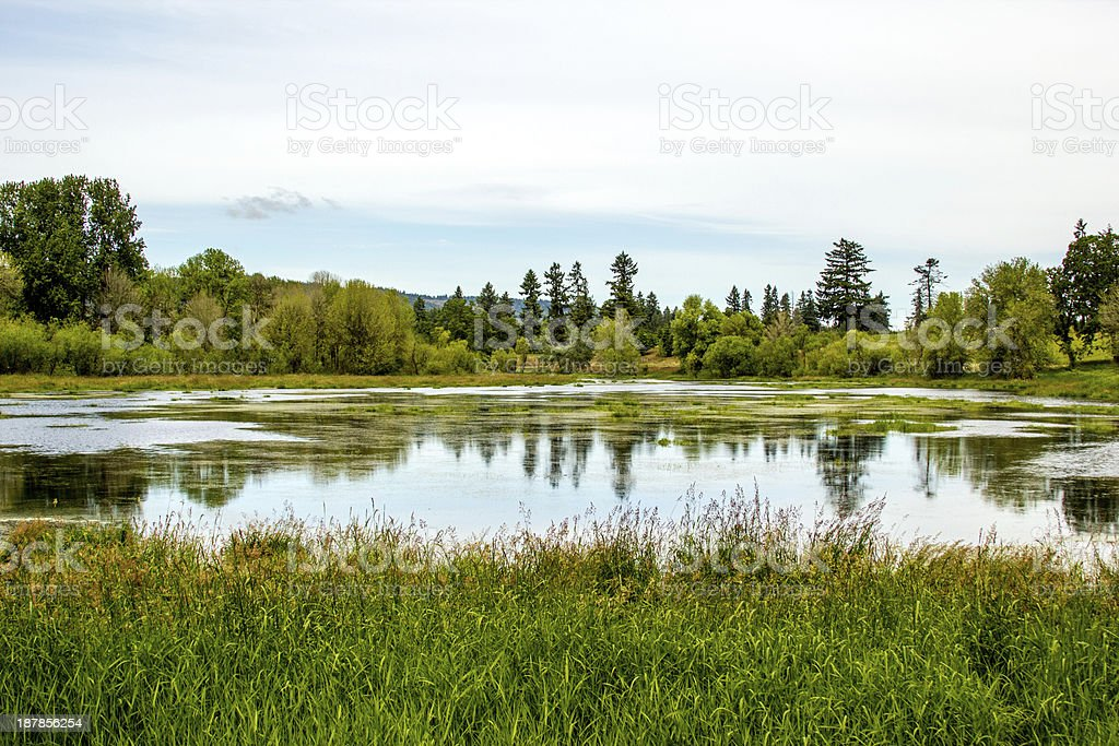 Wetlands / Marsh at Sauvie Island, Oregon stock photo