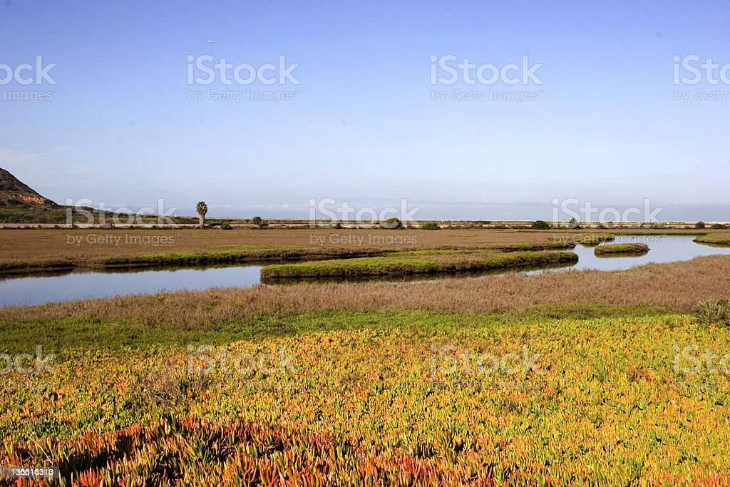 Wetlands near the ocean royalty-free stock photo