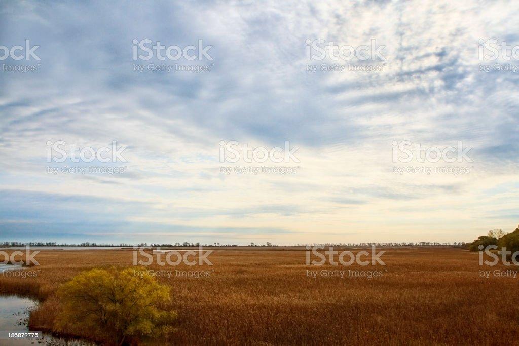Wetlands Point Pelee Ontario stock photo
