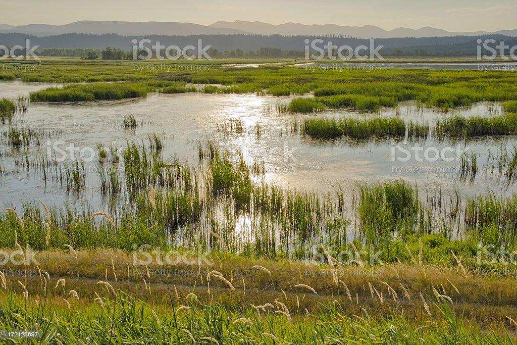Wetlands sunrise reflection royalty-free stock photo