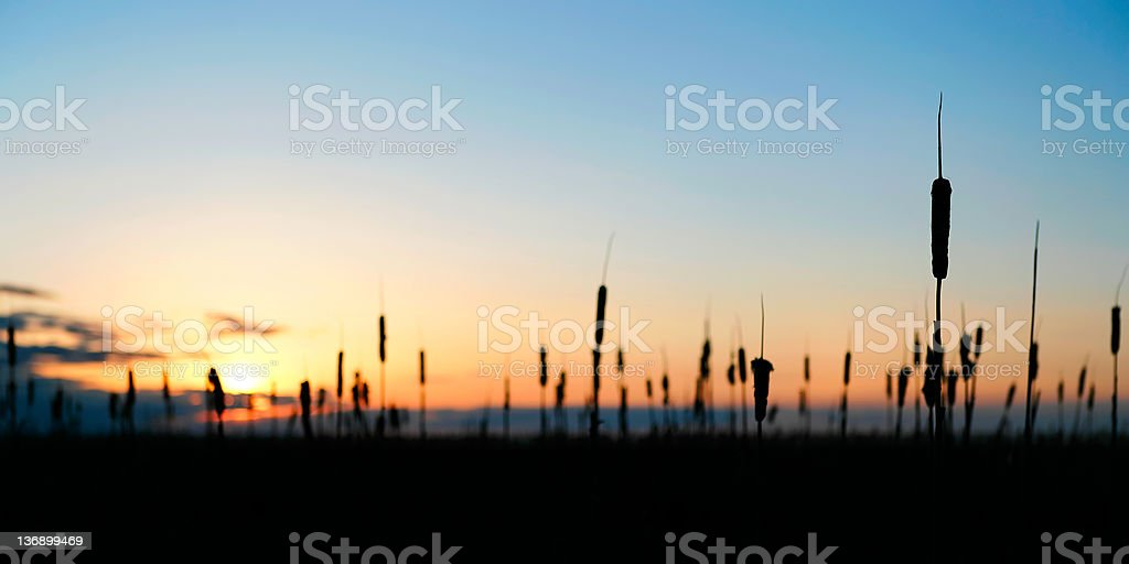 wetlands sunset silhouette royalty-free stock photo