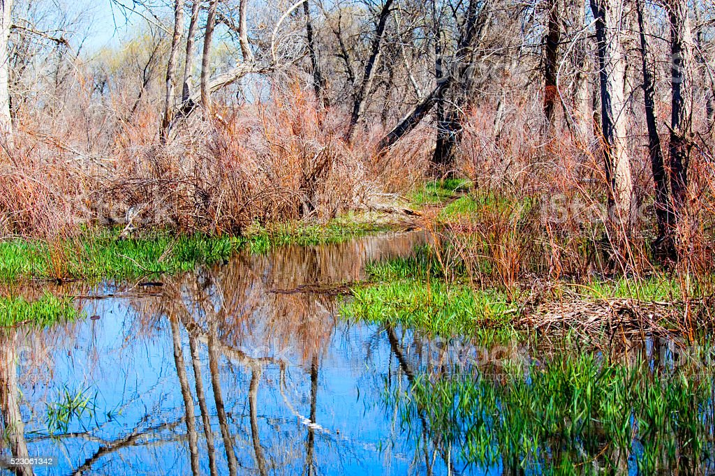Wetlands Viewing Area in Chatfield State Park stock photo