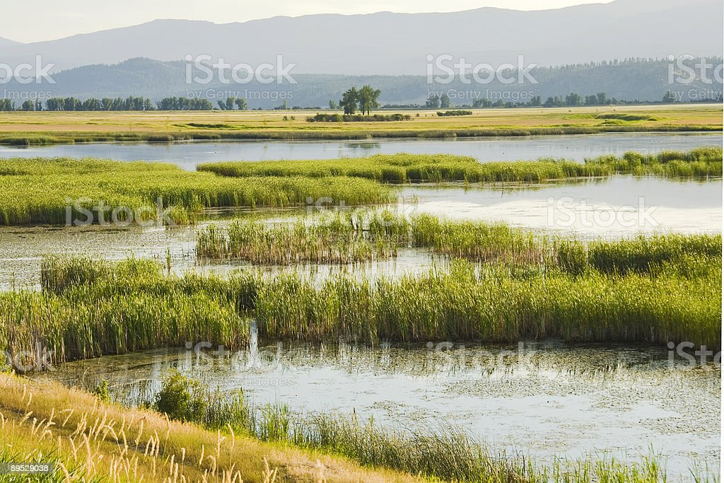 Wetlands yellows and greens royalty-free stock photo