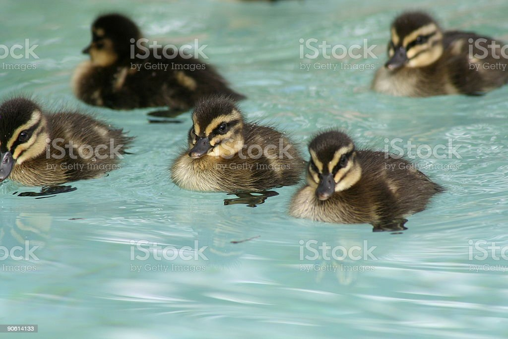 we've invaded the swimming pool royalty-free stock photo