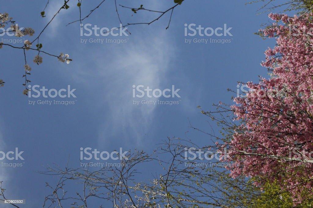 Whadam Forest sky 3 stock photo