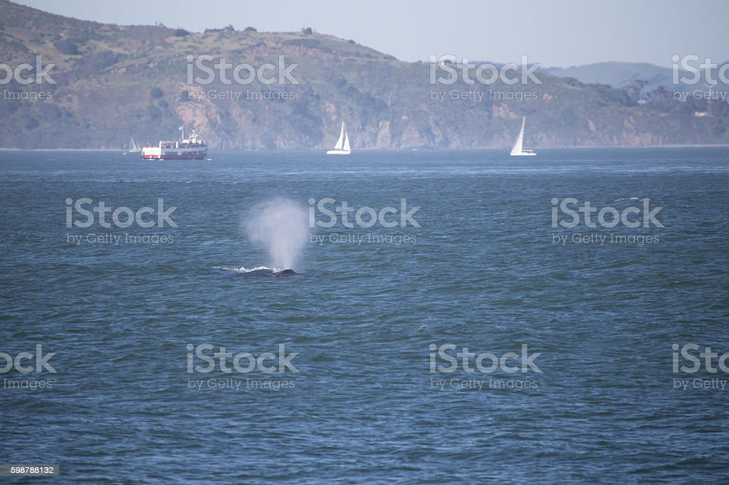 Whale blowing out water stock photo