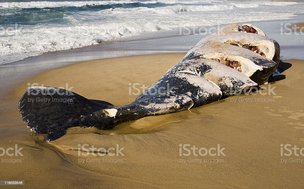 whale cut by prop stock photo