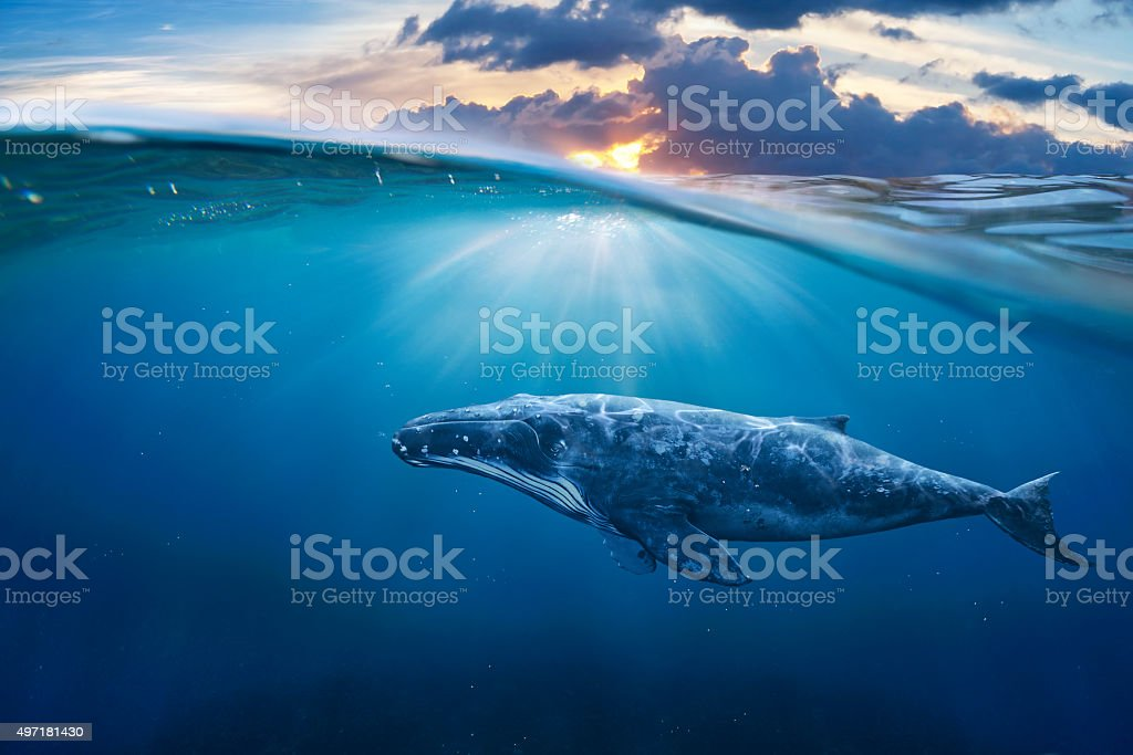 whale in half air stock photo