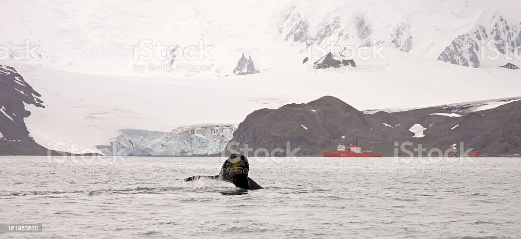 Whale motion royalty-free stock photo