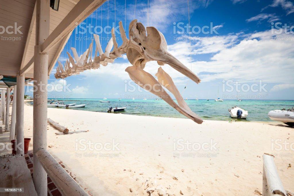 Whale skeleton stock photo