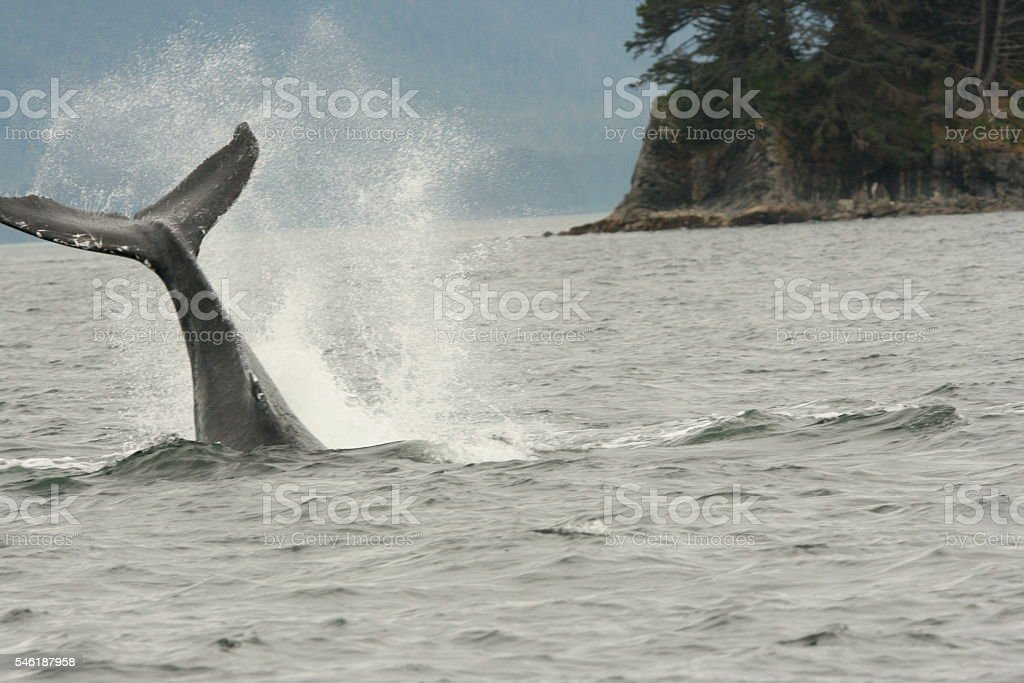 Whale Tail Fin Causes Spray stock photo