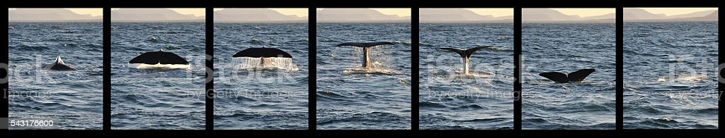 Whale tail with drops water at sunset stock photo