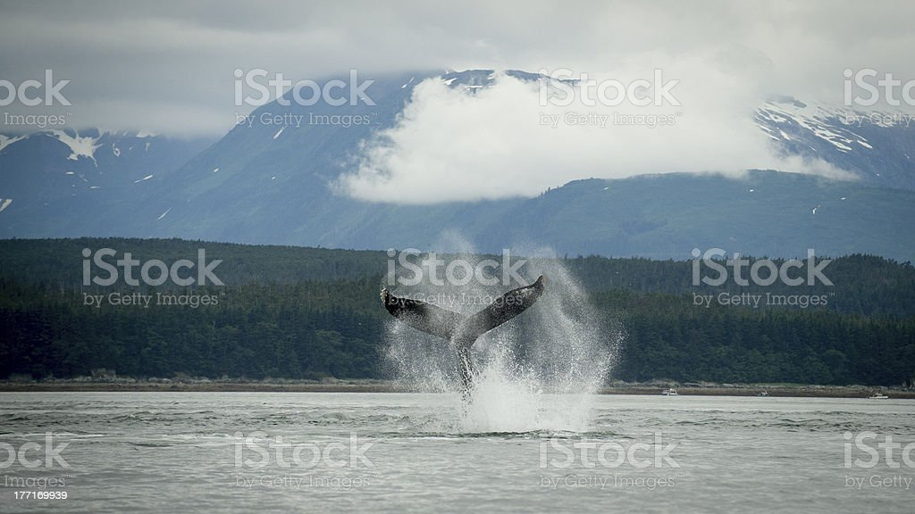 Whale Tail with Spray in Front on Mountainous Scenery royalty-free stock photo