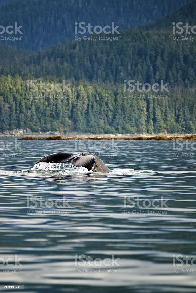 Whale watching adventure stock photo