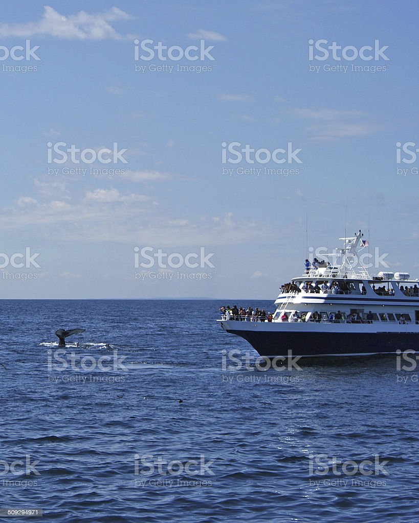 Whale Watching Boat stock photo