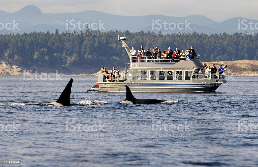 Whale Watching Tour  in B.C. stock photo