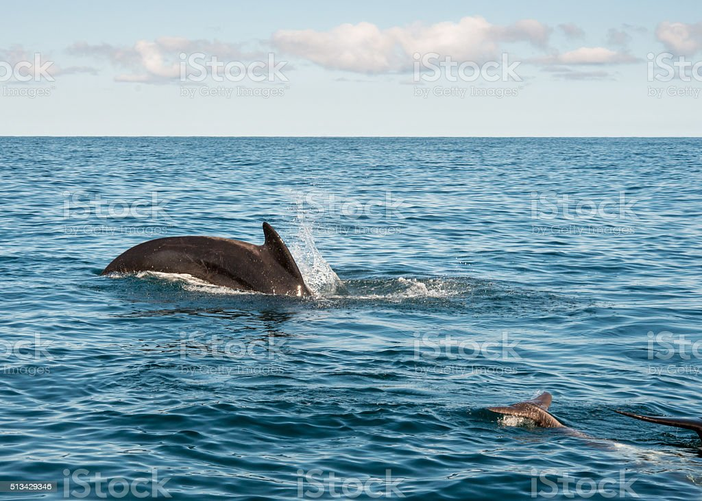 Whale watching in Cape Breton, Nova Scotia, Canada stock photo