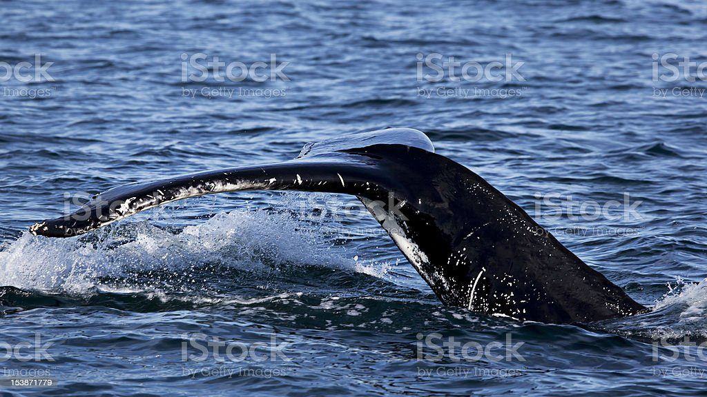 Whale watching royalty-free stock photo