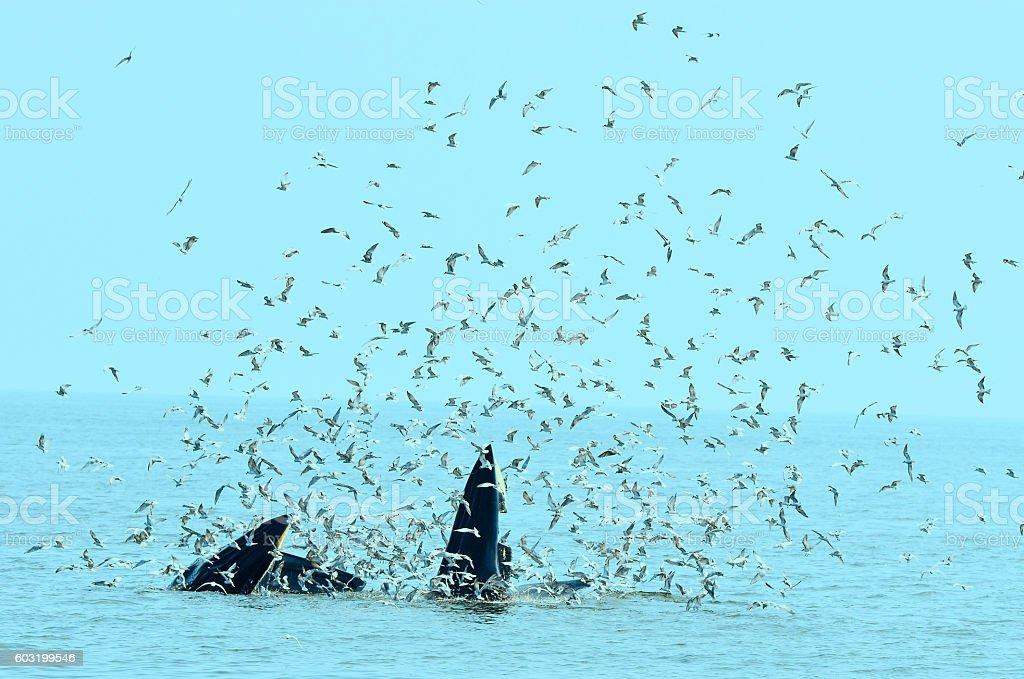 Whales sea 2 stock photo