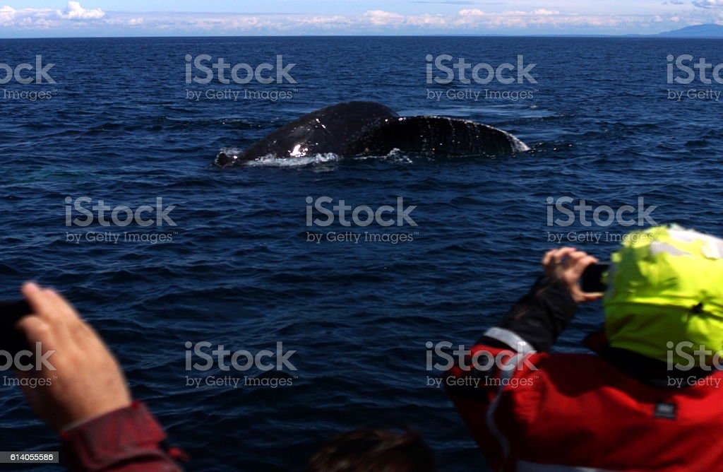Whalewatching in the Pacific Ocean stock photo