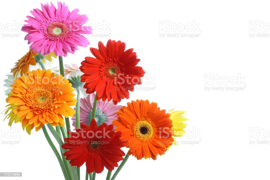 What A Daisy! (with copyspace) stock photo
