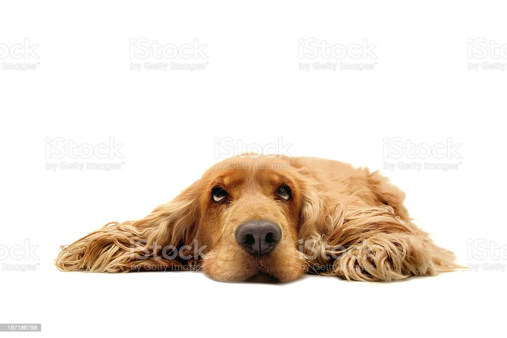 What a dog day ! stock photo