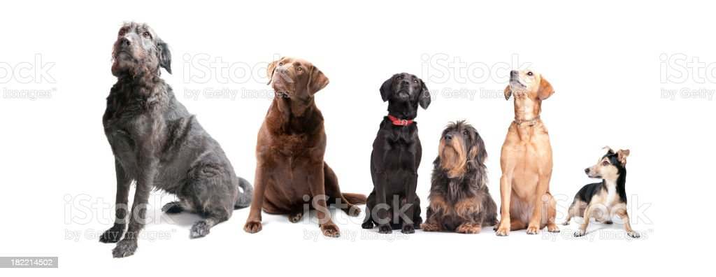 what a menagerie! stock photo