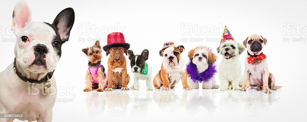 what costume do you preffer? stock photo