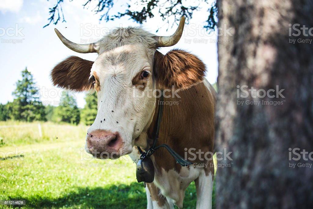 What do you want Mister stock photo