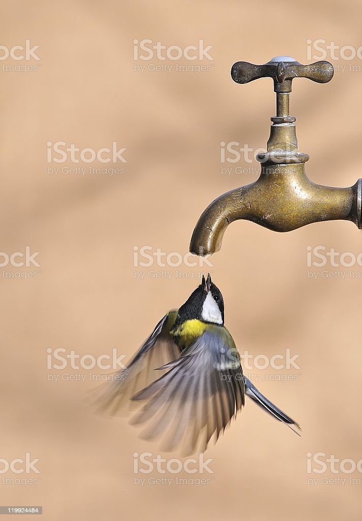 What I'm thirsty. royalty-free stock photo