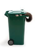 What kind of animal in the garbage bin.