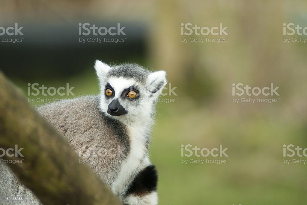 What!?!! royalty-free stock photo