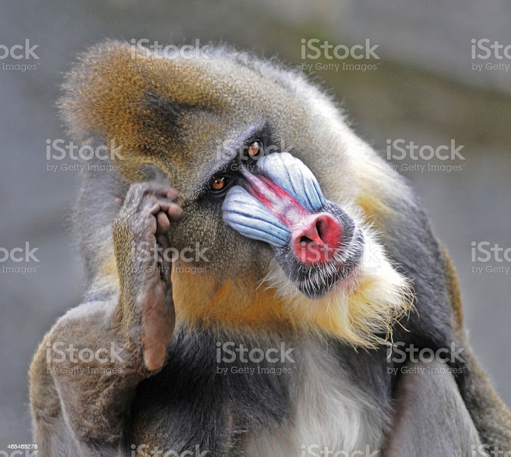 What shall I say ? stock photo