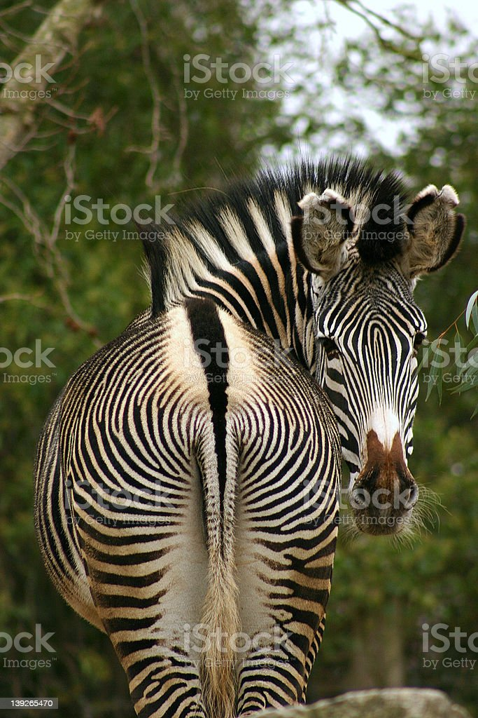 What you looking at? royalty-free stock photo