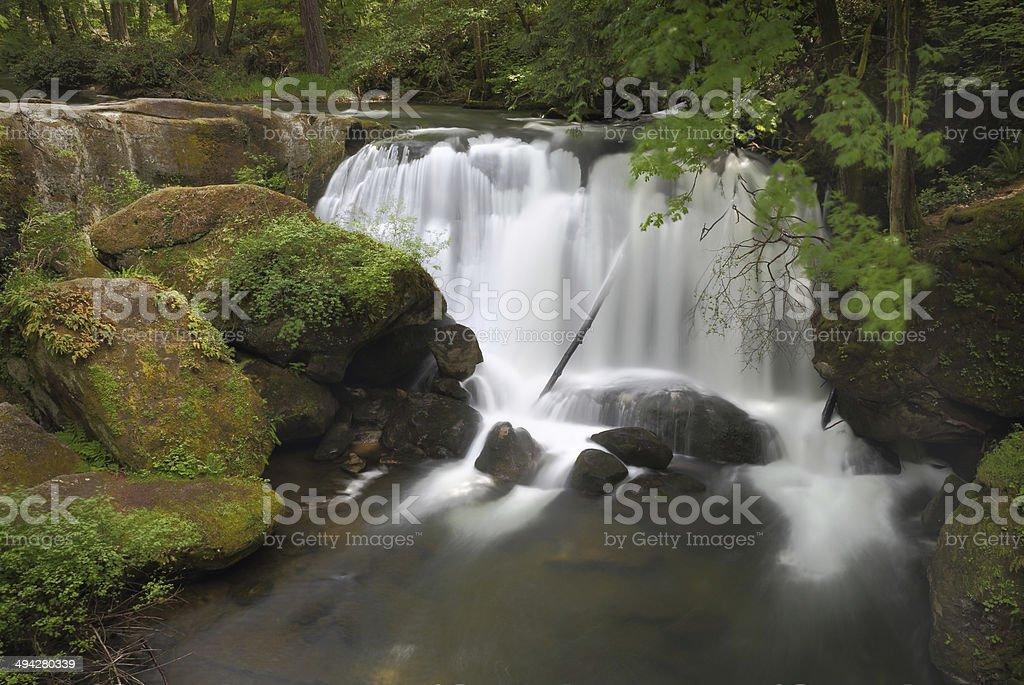 Whatcom Falls, Bellingham royalty-free stock photo