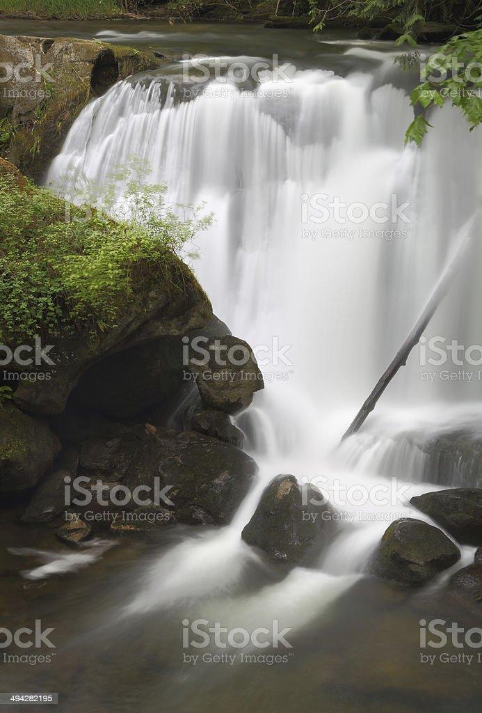 Whatcom Falls, Bellingham, Washington royalty-free stock photo
