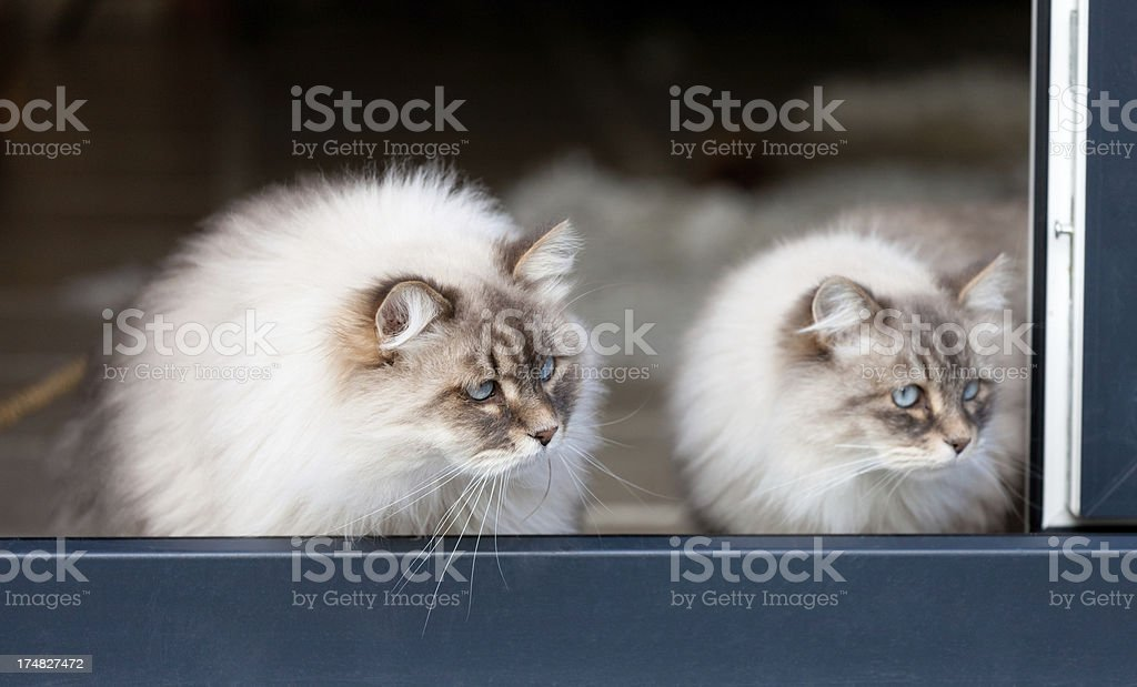 whats going on there? royalty-free stock photo