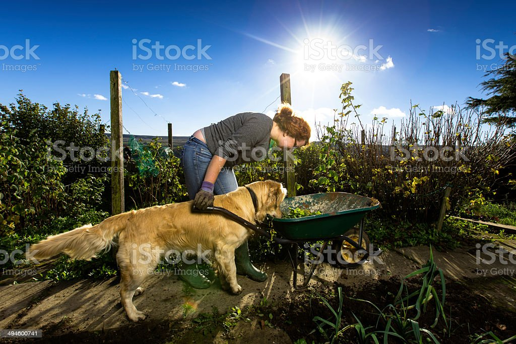 What's in the Wheelbarrow? royalty-free stock photo