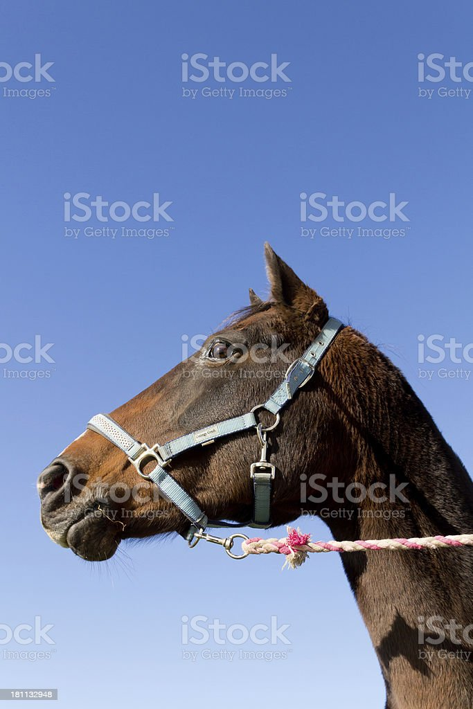Whats that? royalty-free stock photo