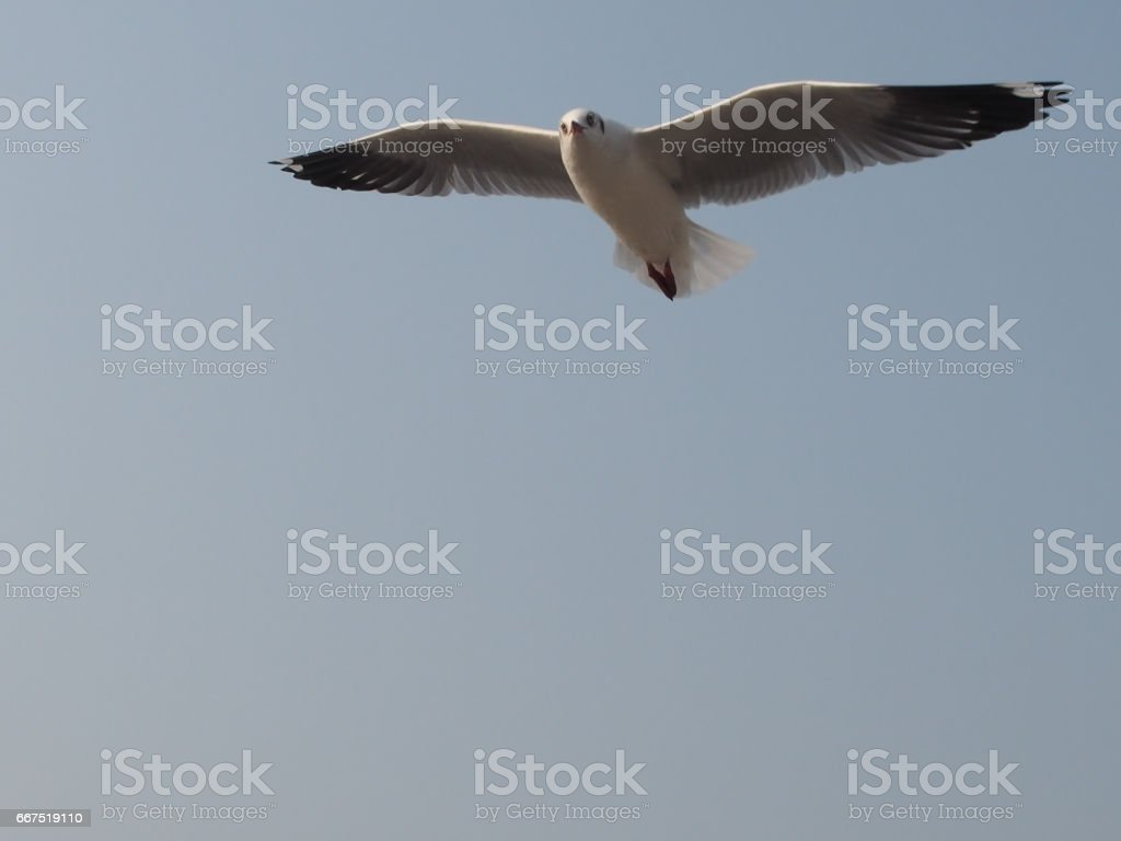 What's up ?, bird asking. stock photo