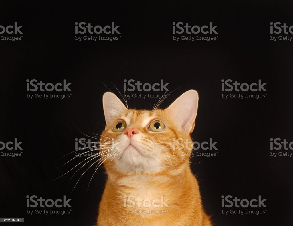 What's Up Cat stock photo