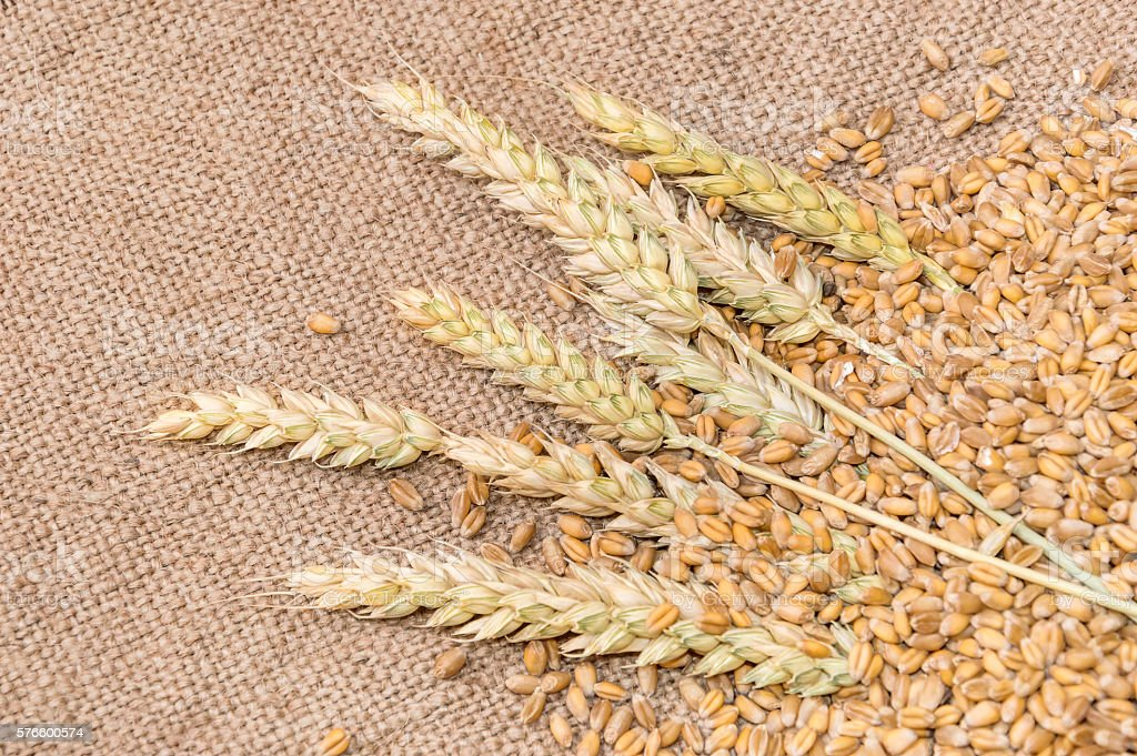 Wheat and ears on sacking stock photo