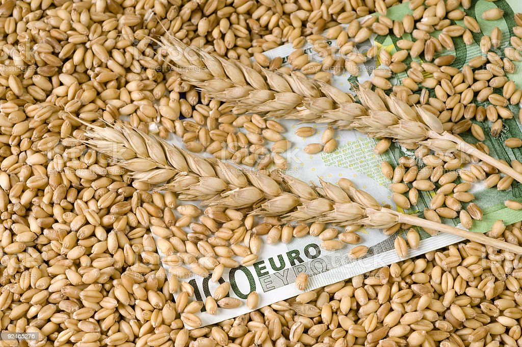 Wheat and money royalty-free stock photo