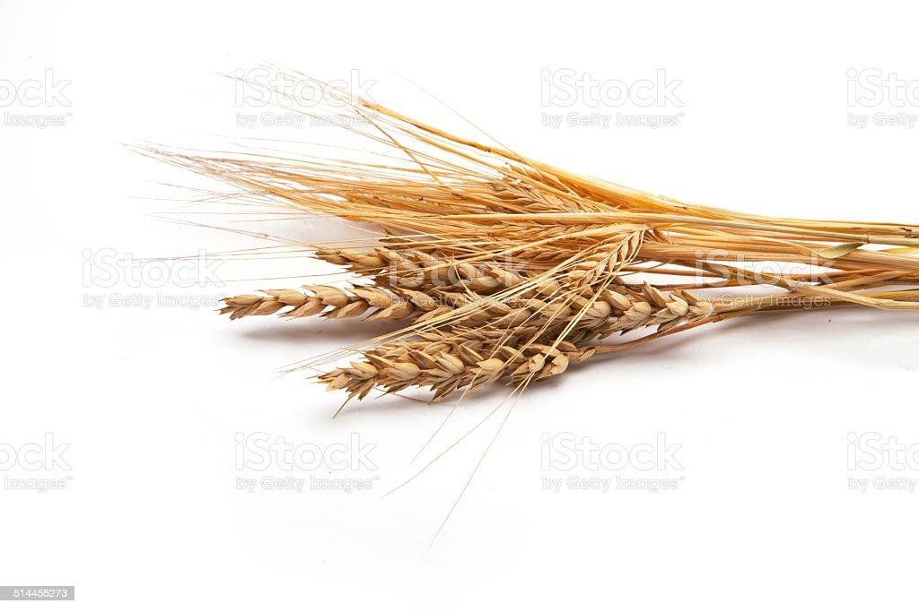 Wheat and Rye stock photo